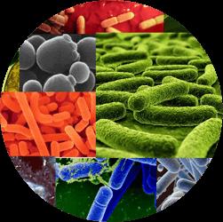 Запас бактерий для канализации на год